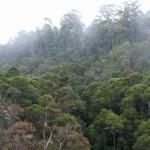 Dimman stiger ur regnskogen