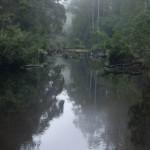 Flod i regnskogen